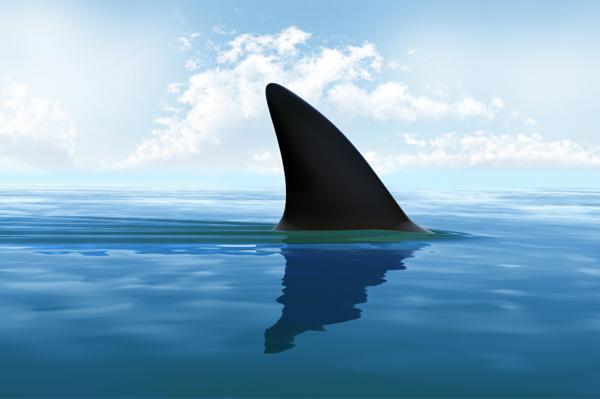 shark-fin-ocean